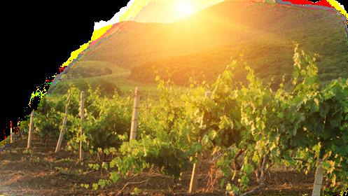 vineyard-watermark_497x280