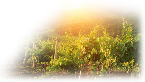 vineyard-watermark_497x280